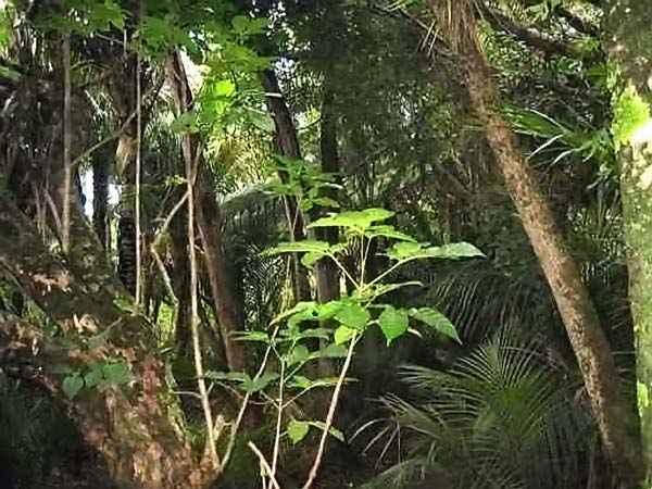 forêt à Auckland 1