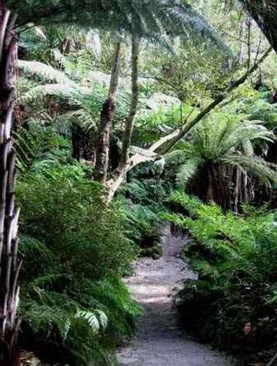 forêt à Auckland 2