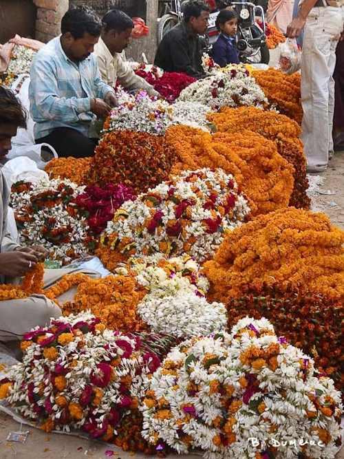 Fleurs pour offrandes