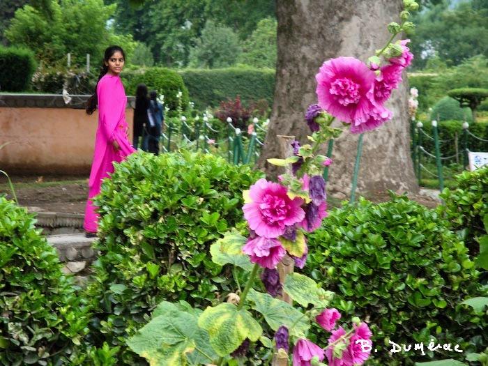 jardin à Srinagar