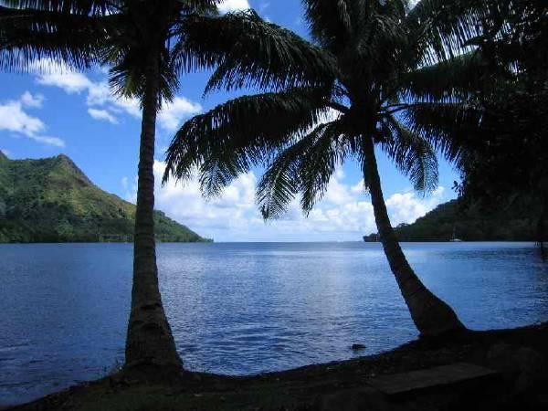 Palmiers aux fidji