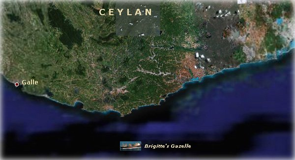 La Gazelle à Ceylan