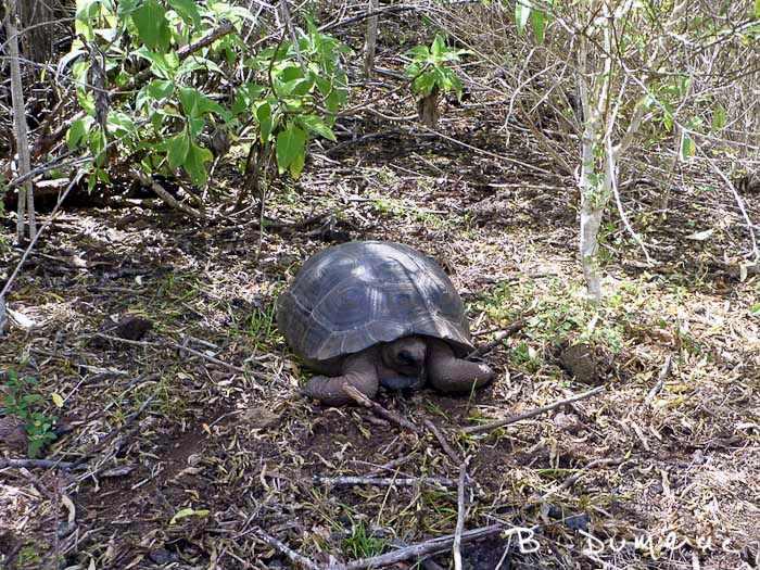 Au bord du chemin, Galapagos