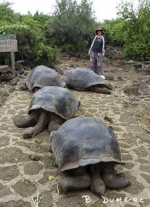 Brigitte et les tortues géantes