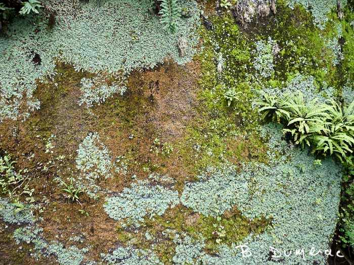 lichens multiples Galapagos