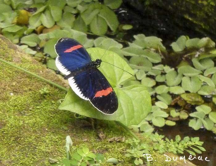 Réserve à papillons orchidées et colibris 2