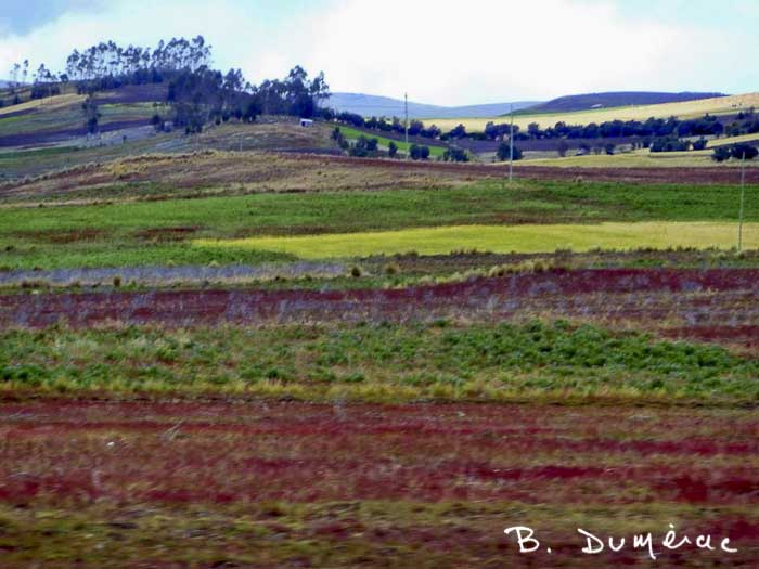 Paysage alentour Cuenca 5