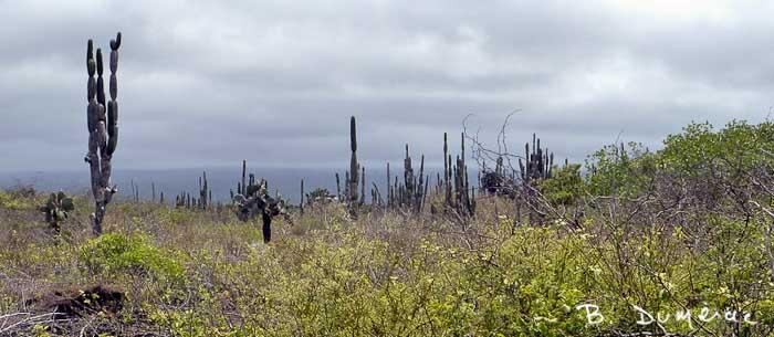 Paysage des Galápagos