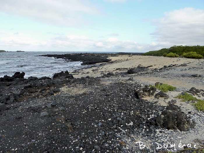 Plage de lave Galapagos