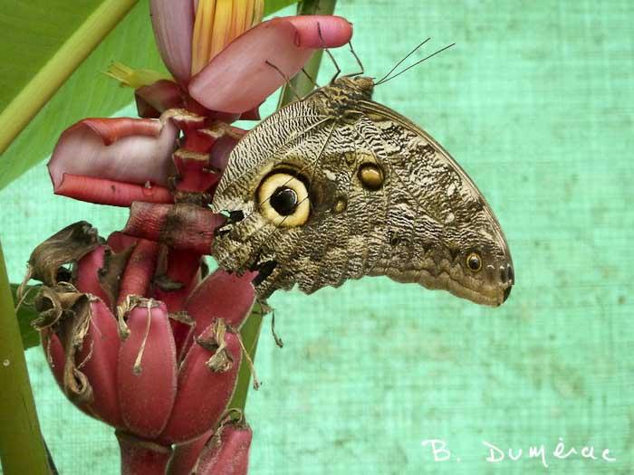Réserve à papillons orchidées et colibris 1