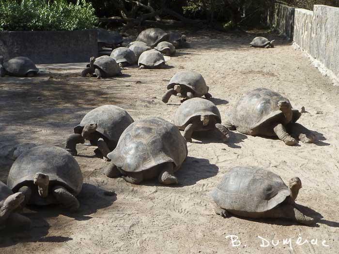 Réserve de tortues