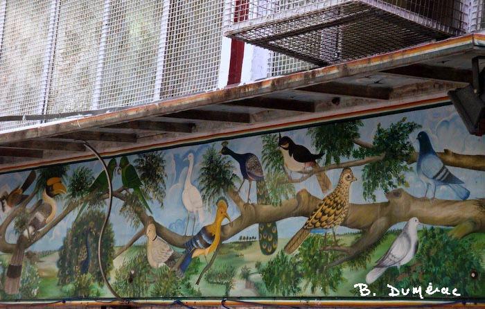hopital pour oiseaux 1