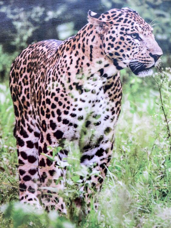 Darjeeling zoo_1