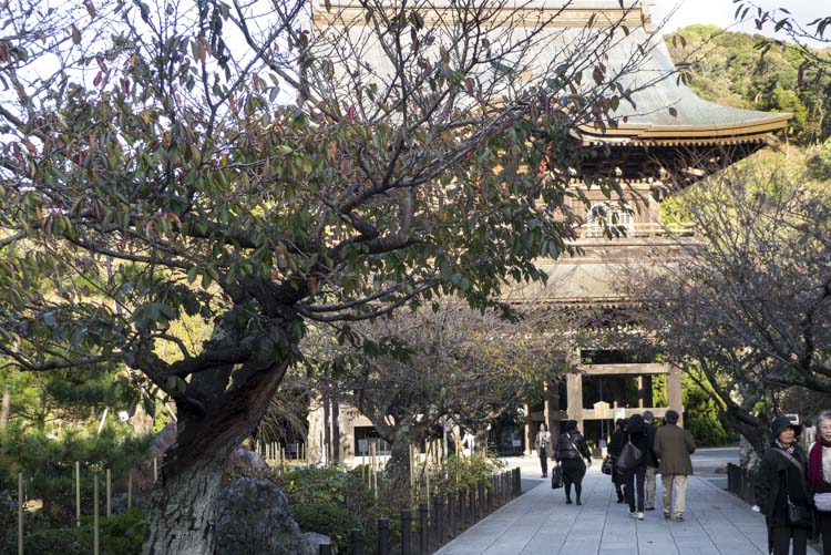 Kamakura 8