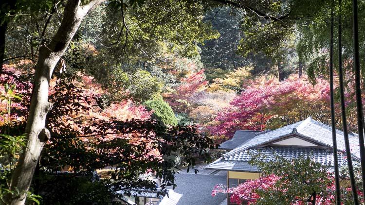 Arashiyama Kokedera 4