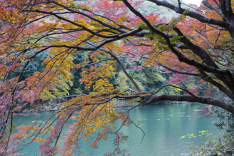 Arashiyama 11