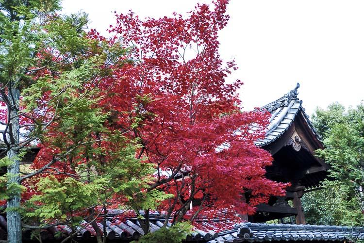Daitoku-ji 8