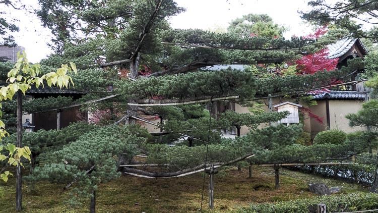 Daitoku-ji 9