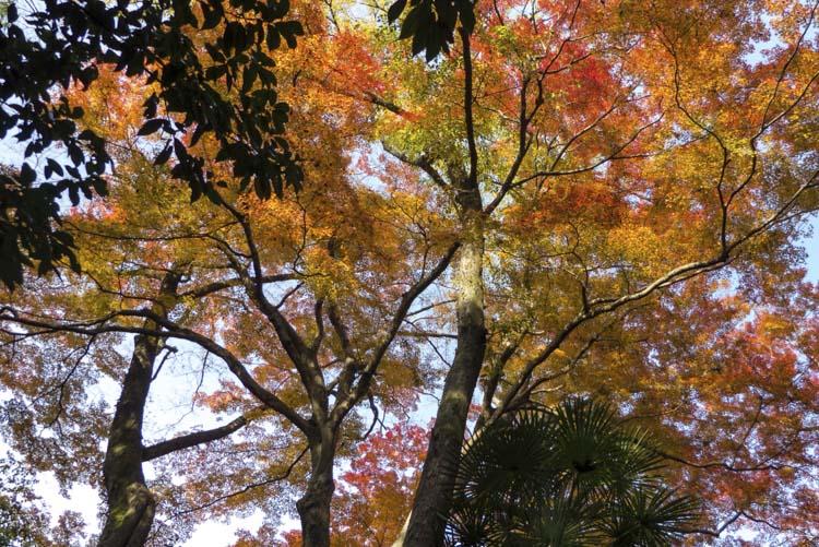 Kyoto jardins 2