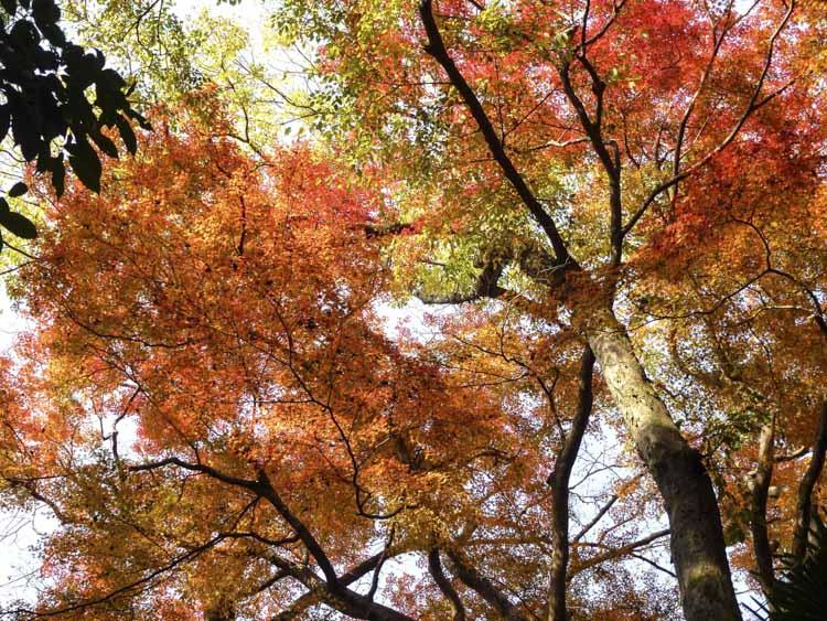 Kyoto jardins 3
