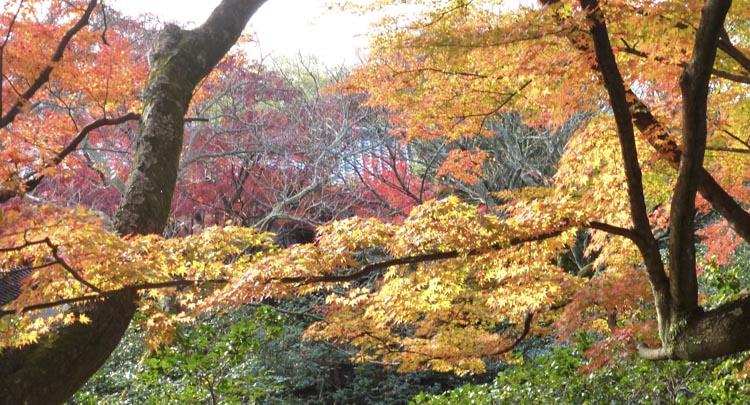 Kyoto jardins 4
