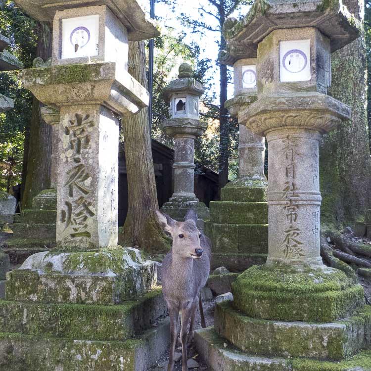 Nara Kasuga Taisha 1