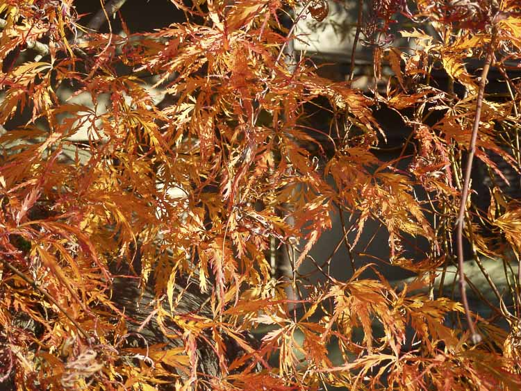 Arashiyama 8