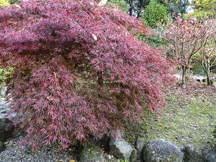 Nara, jardin Isuien 9