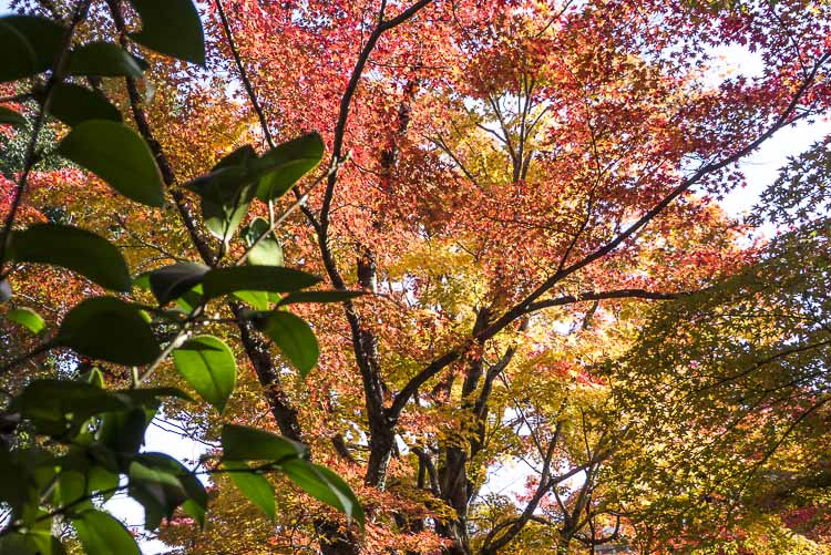 Arashiyama Tenryu-ji 4