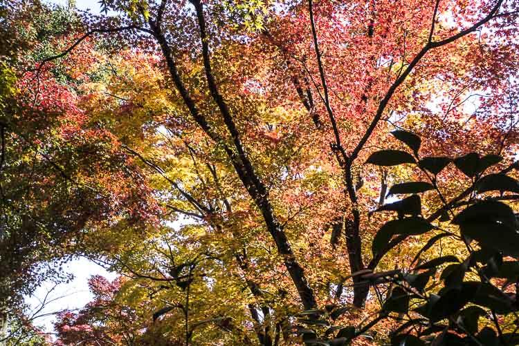 Arashiyama Tenryu-ji 7
