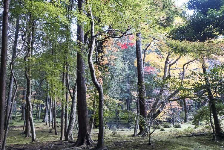 Arashiyama Kokedera 1
