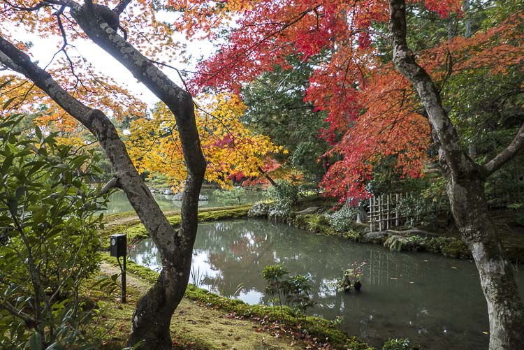 Kinkaku-ji 8