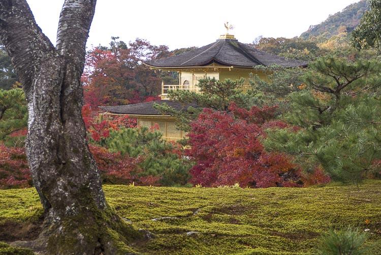 Kinkaku-ji 11