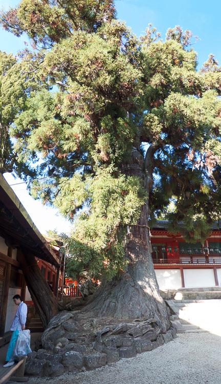 Nara Kasuga Taisha 5