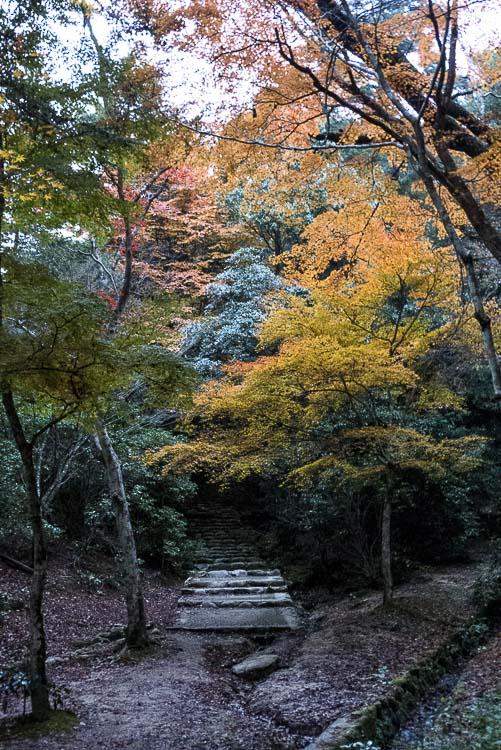 Miyajima 13