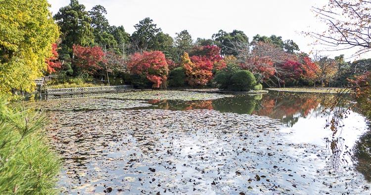 Ryoan-ji Panorama