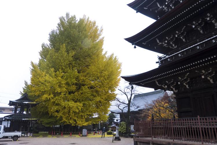 Takayama Kokubun-ji 2
