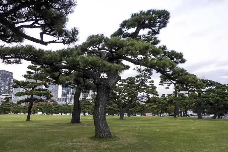 Tokyo Palais 4