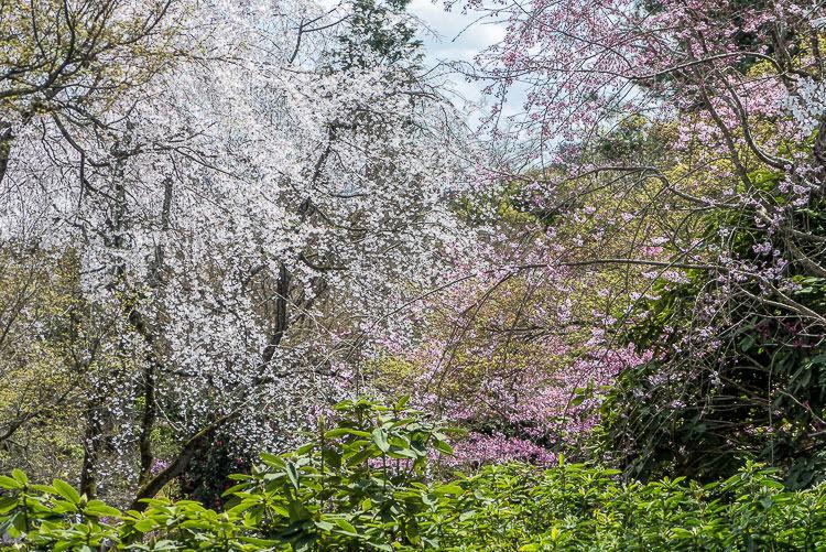 Arashiyama printemps