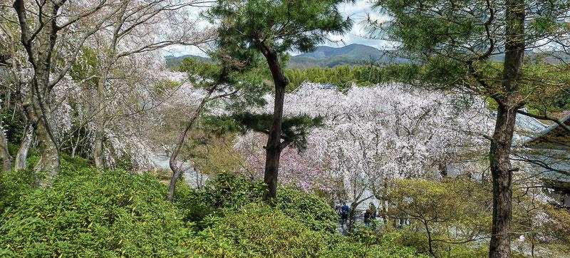 Arashiyama pano2 printemps