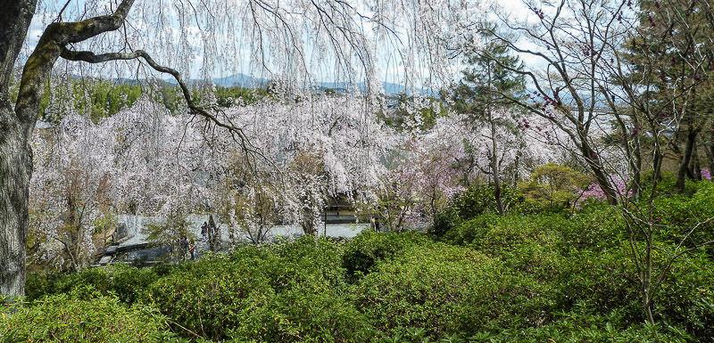 Arashiyama pano3 printemps