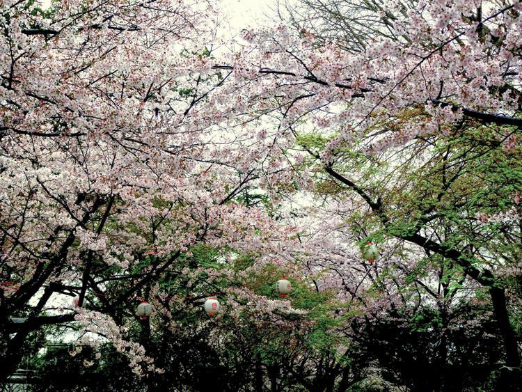 Kumamoto 15