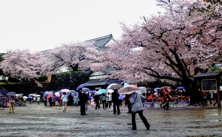 Kumamoto château 11