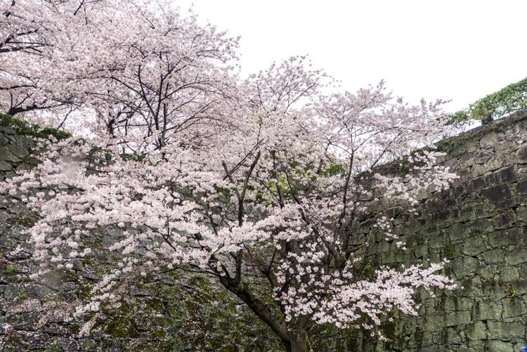 kumamoto 07