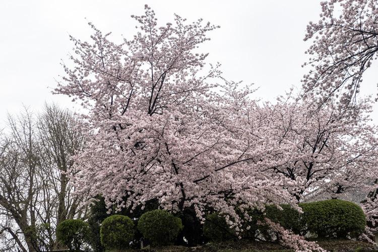 Kumamoto 10