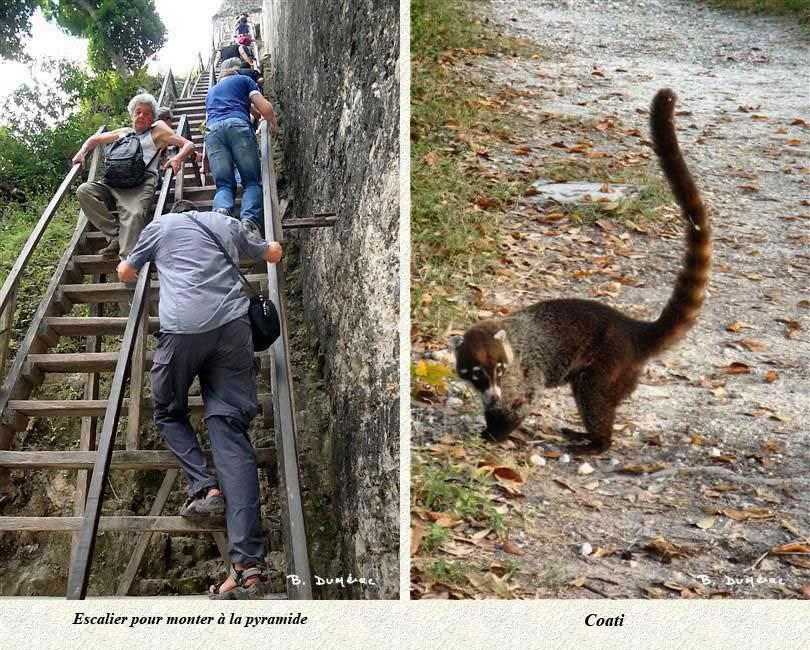 Escalier et coati