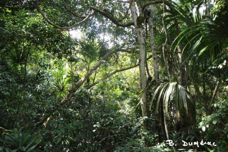 Forêt à Tikal 2