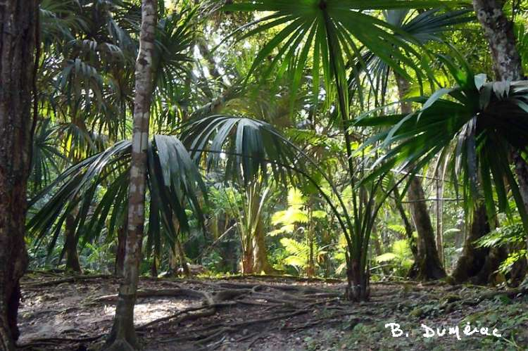 Forêt à Tikal 3