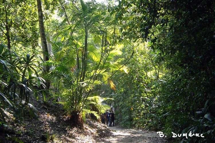 Sentier dans la forêt Tikal