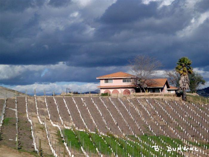 Temecula, vallée des vins